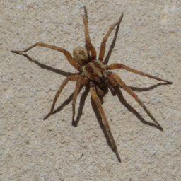 Уничтожение пауков в Соликамске